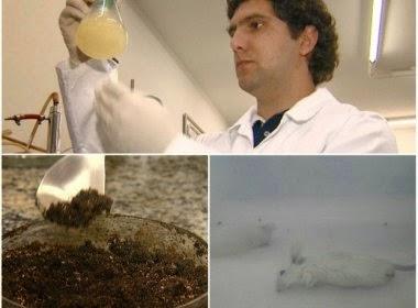Substância repele e mata mosquito da dengue
