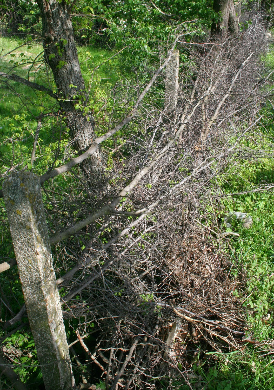 Traditional fencing to be cleared