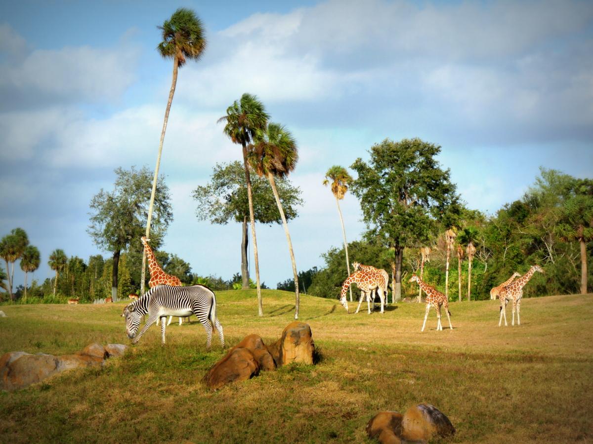 Busch Gardens J M Vigil Photography