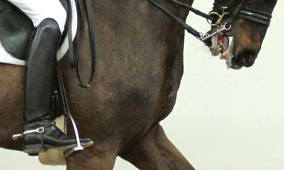 how to become an equestrian