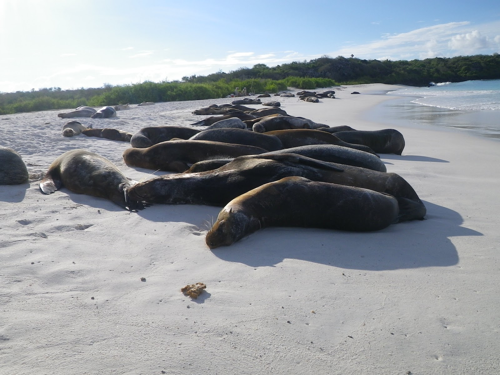 Travel In The Nature Pictures Of Galapagos Islands