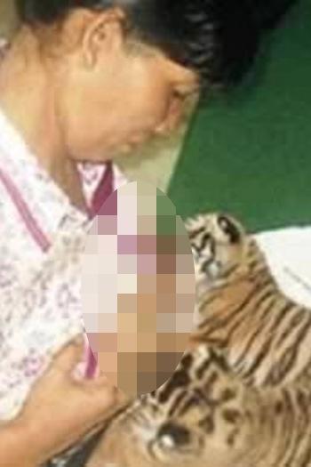 Merawat harimau saja sudah menakutkan, apalagi menyusuinya di payudara