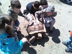 The Tortoise