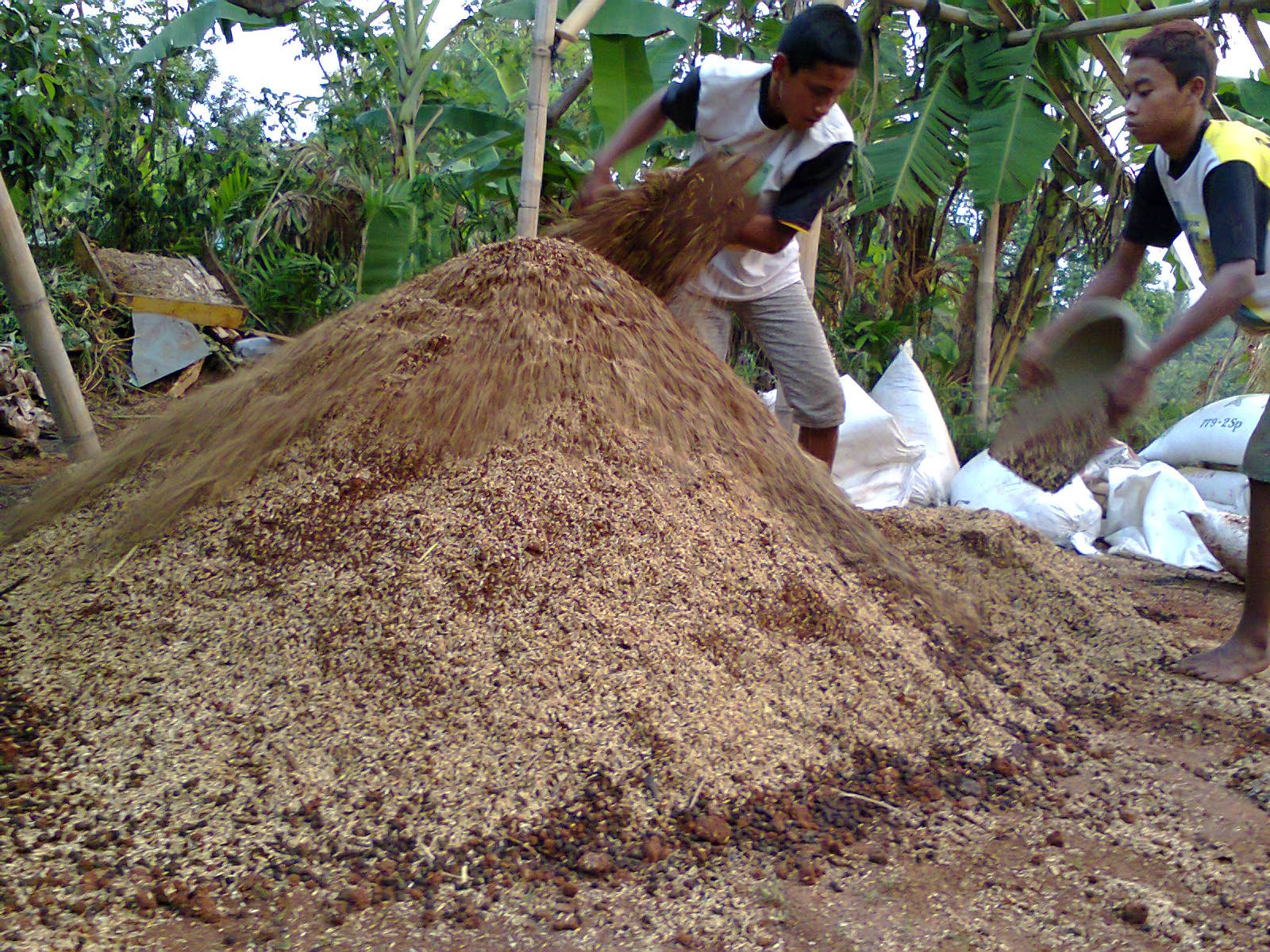 organic waste being fertilizer