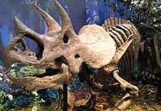 Sejarah Dinasaurus