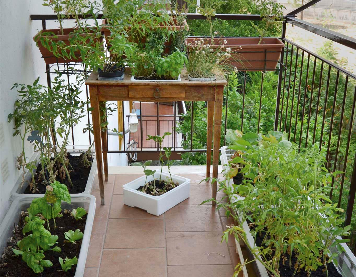 Orto sul balcone, I\'m obsessed!   fourfancy Magazine