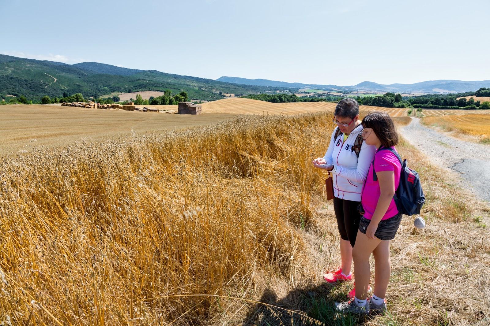 Lección de cereales para urbanitas :: Canon EOS 5D MkIII | ISO100 | Canon 24-105 @24mm | f/10 | 1/80s