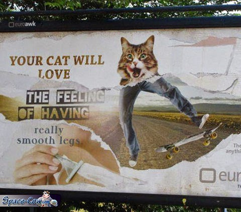 funny messages cats humor
