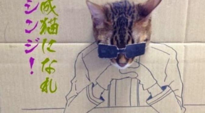 Lucunya Cosplay yang Dilakukan Kucing di Jepang ...