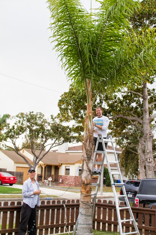how to install christmas lights on a tree - How To Put Christmas Lights On Tree