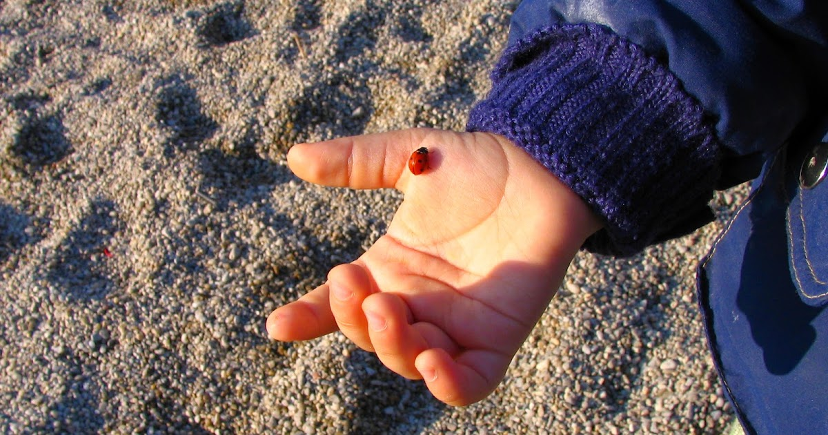 the spiritual embryo absorbent mind and Note: much of this post is directly attributable to dr maria montessori's the absorbent mind's seventh chapter - the spiritual embryo dr.