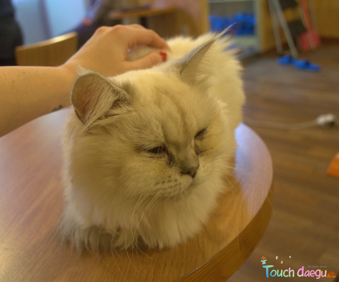 A variety kinds of cat in Cat cafe