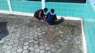 Mencabut Rumput