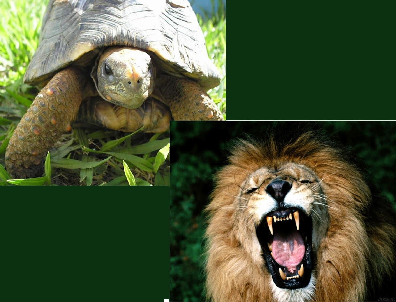 Leão e a Tartaruga
