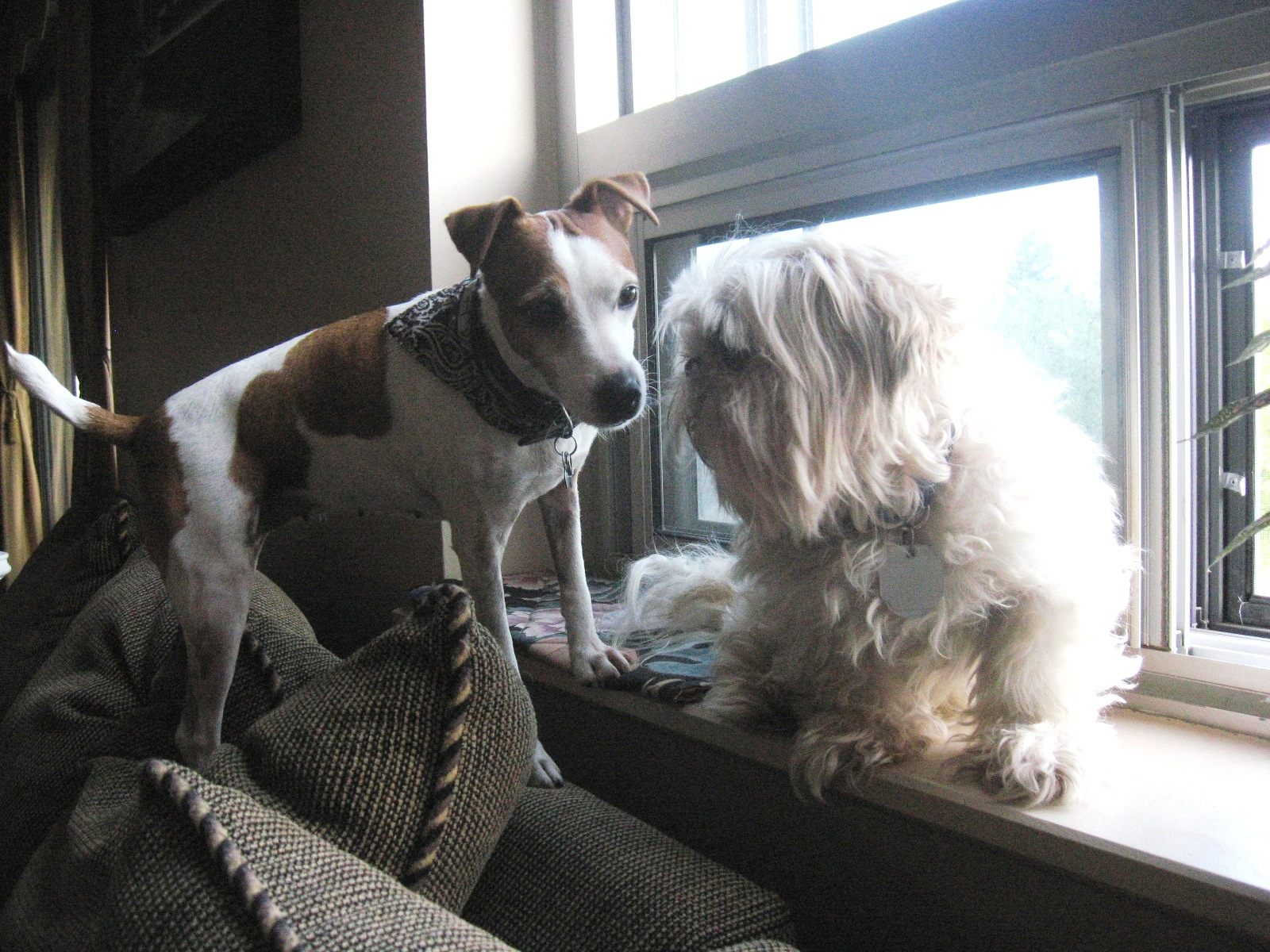 Worship Melodies - Little White Lies - Photo by Carla Cooper - All Copyrights Reserved - Cracker Jack & Casey