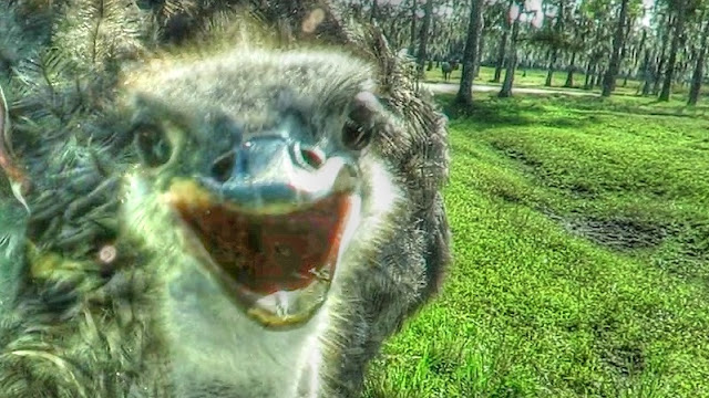 Friendly Ostrich