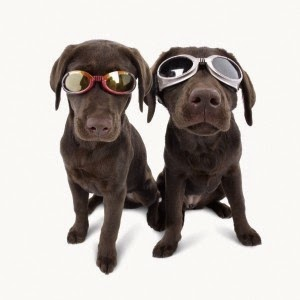 goggles for dogs have polycarbonate (shatterproof), anti-fog lenses which block 100% of UV light and keep out wind and debris.