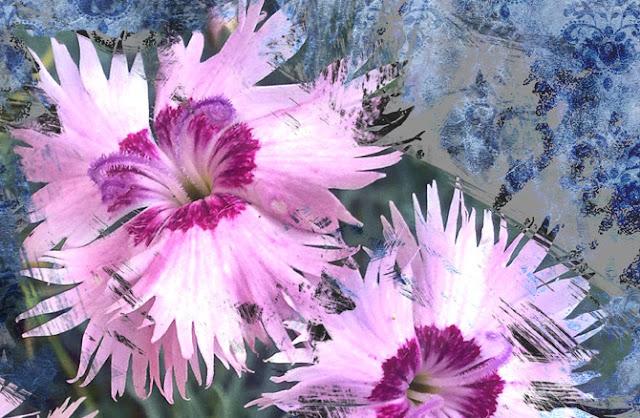 dianthus-flor-silvestre-detalle-tres-composición-digital