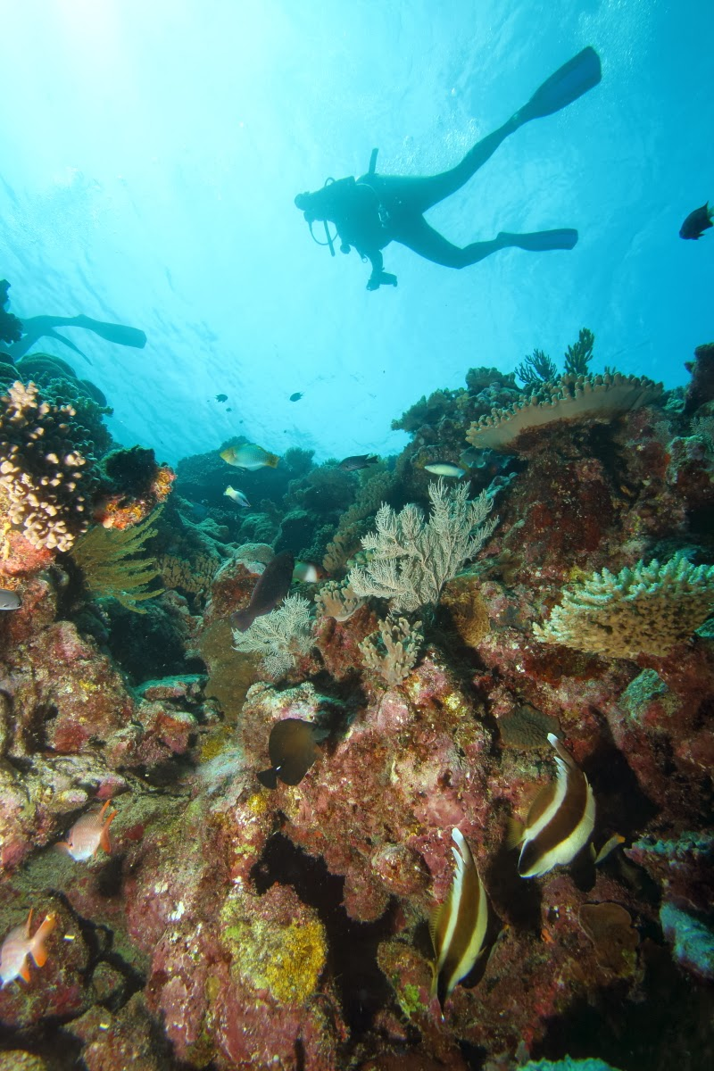 Capturing the moment scuba diving the great barrier reef - Dive great barrier reef ...