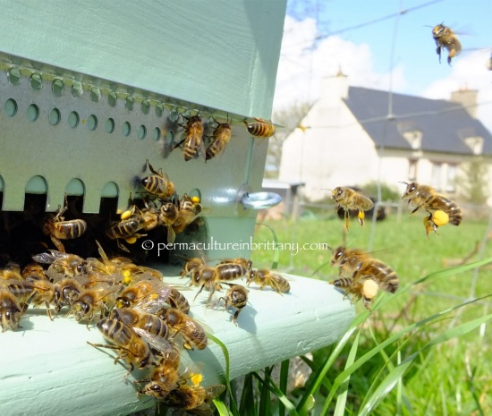 Permaculture in brittany busy busy busy for Permaculture bretagne