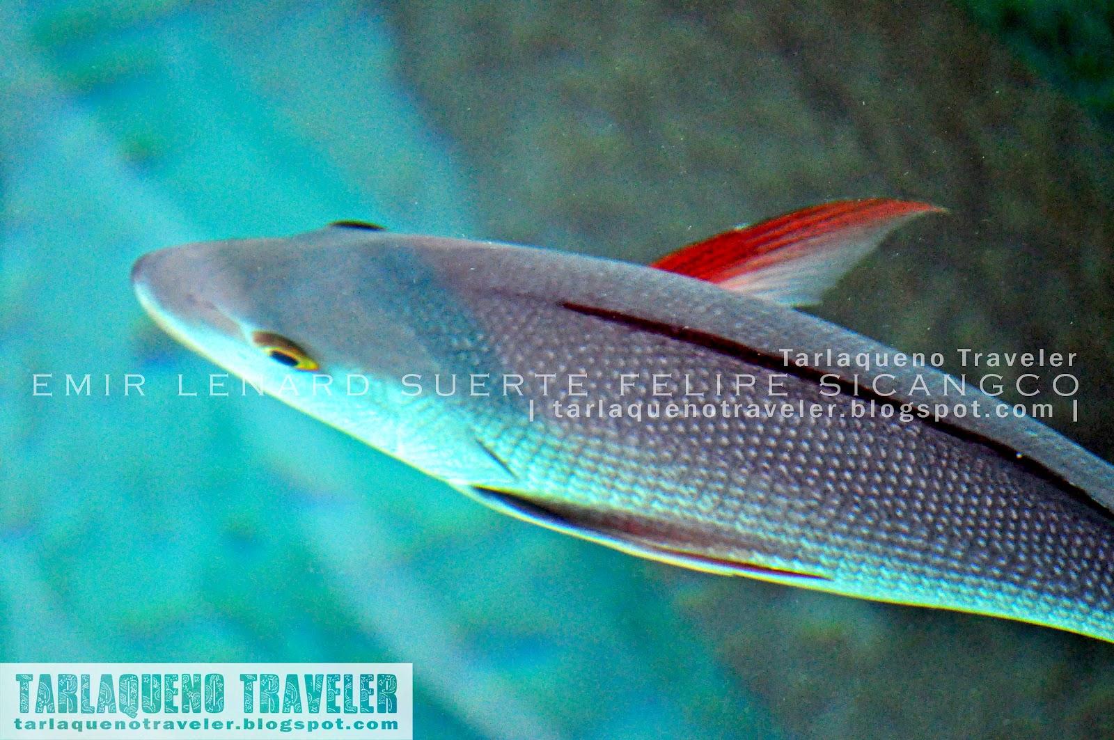 Fish at Hidden Island Resort