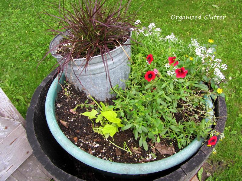 Deer Damaged Container Garden www.organizedclutterqueen.blogspot.com