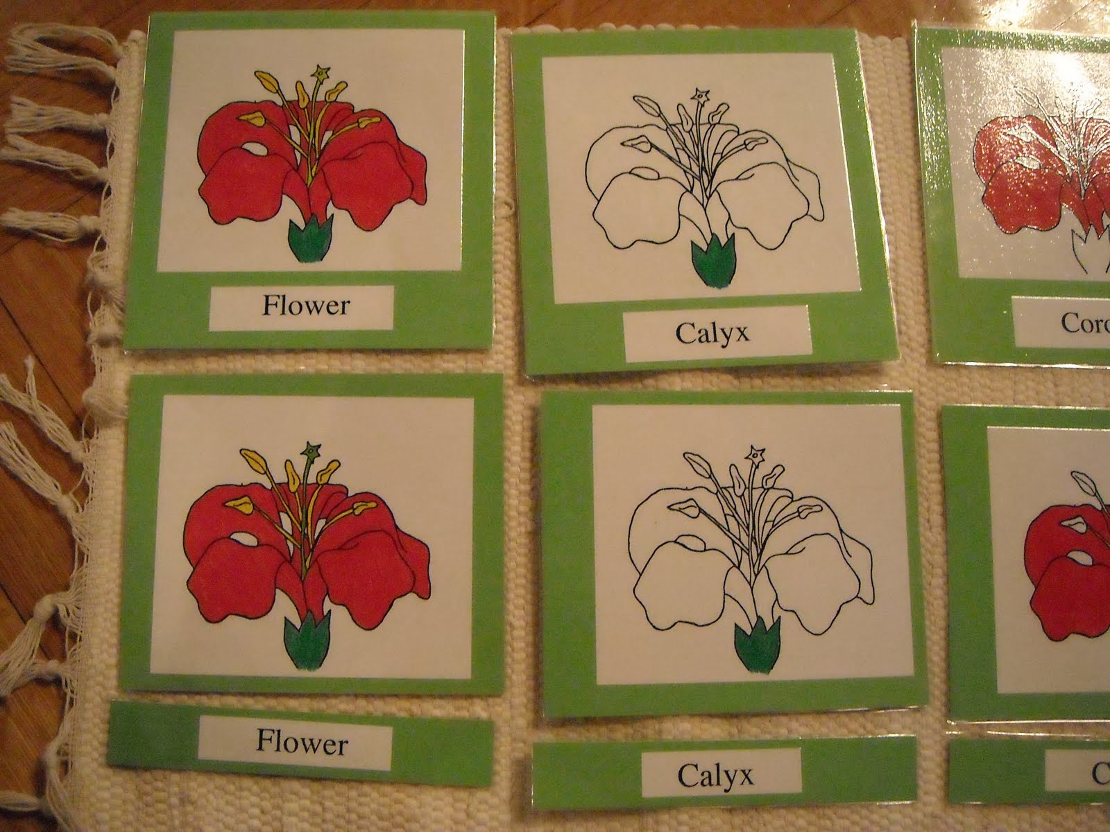 Inside the child parts of a flower hibiscus picturelabel cards on a green paper laminated under it are separate picture and label cards izmirmasajfo