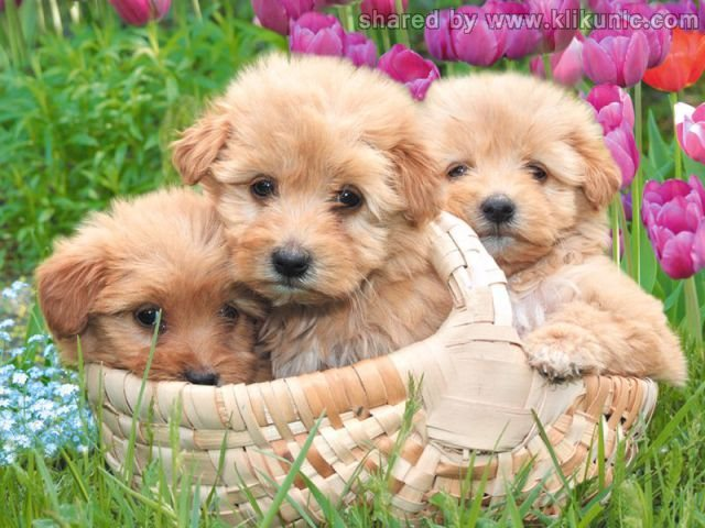 http://2.bp.blogspot.com/-ba8ajAbadGM/TXzEnE_3hzI/AAAAAAAAREA/9k5A-SlPrZc/s1600/these_funny_animals_635_640_18.jpg