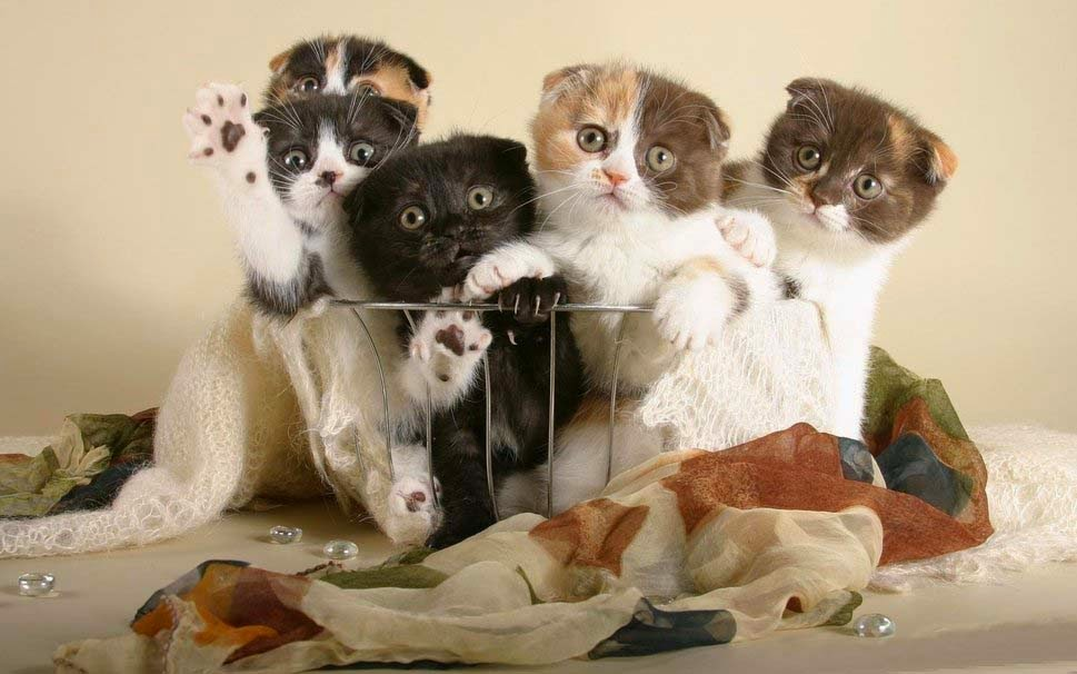 funny-kitten-in-a-basket