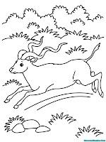 Mewarnai Gambar Antelop Berlari