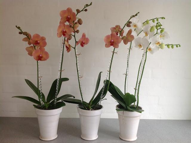 hækleopskrift på orkide