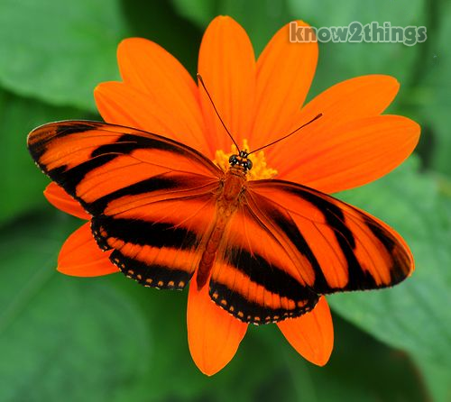 Top 10 Most Beautiful Butterflies | Everything You Know 10 Most Beautiful Butterflies