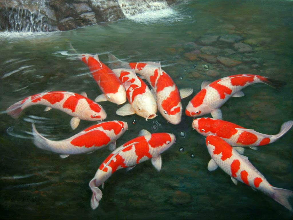 Wallpaper pond free download wallpaper dawallpaperz for Biggest koi fish