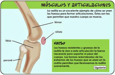 http://kidshealth.org/misc/movie/spanish/bodyBasicsKnee/bodyBasicsESP_knee.html