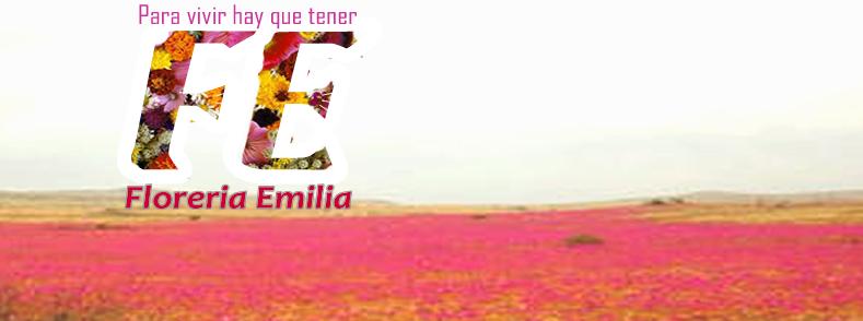 :::::Floreria Emilia Floristeria: Quinta Region Hijuelas-Quillota-La Ligua:::::