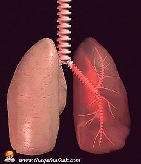 r lungs حقائق مذهلة عن جسم الإنسان