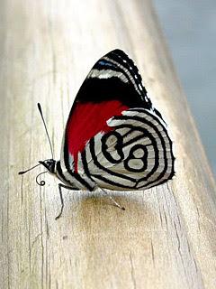 Leptir download besplatne pozadine slike za mobitele