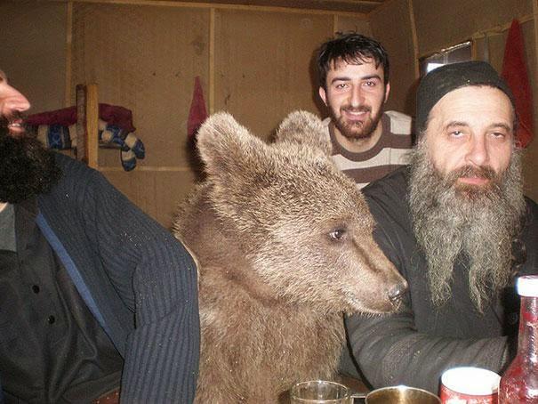 oso tomando unas cervezas con los amigos