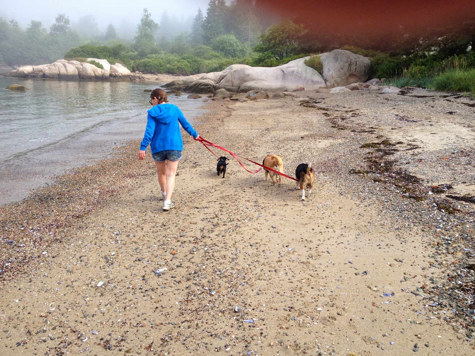 Best Off Leash Dog Hikes Vancouver