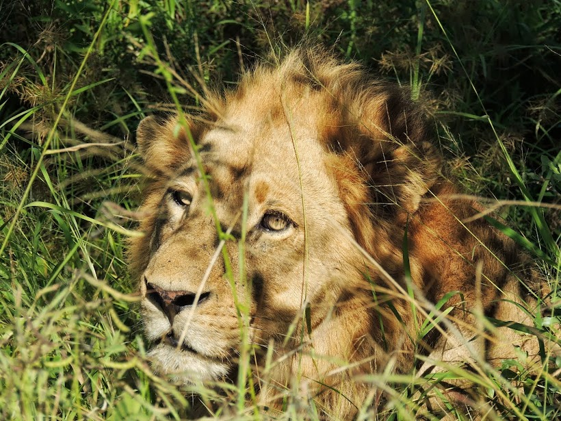 Southern African Parks Tours