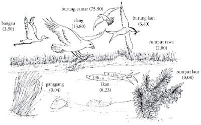 Biological magnification DDT pada rantai makanan