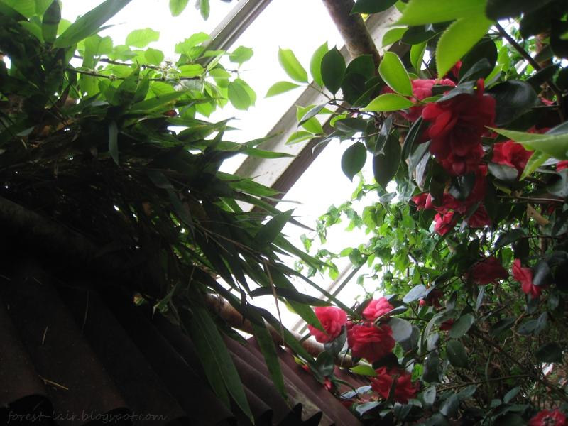 Bamboo and Camellia