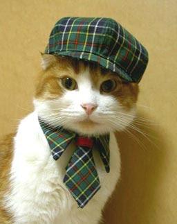 Animales - Como quitar los pelos de gato de la ropa ...