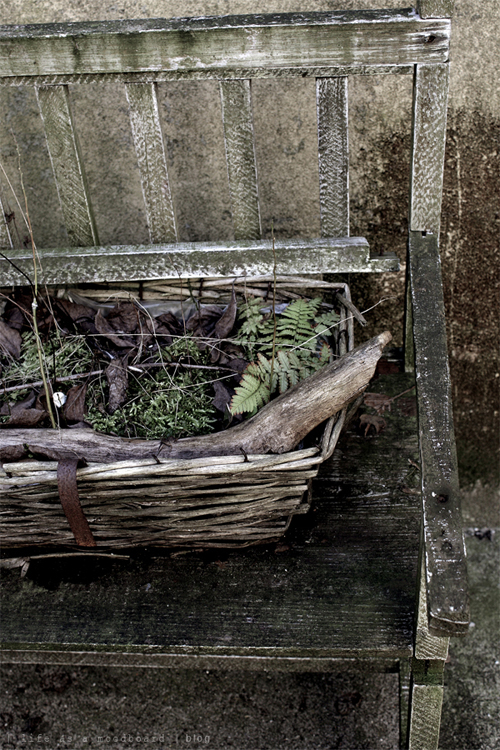 green and grey mossy tones of an old wooden bench in a weather worn pati