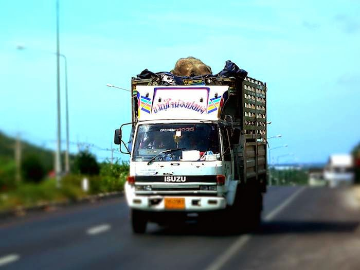 Elefantentransport in Thailand
