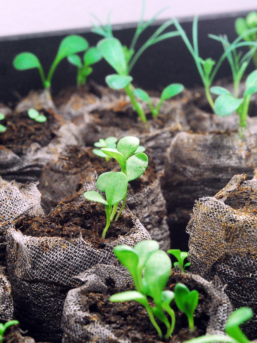 Seedlings Sas Does Seedlings