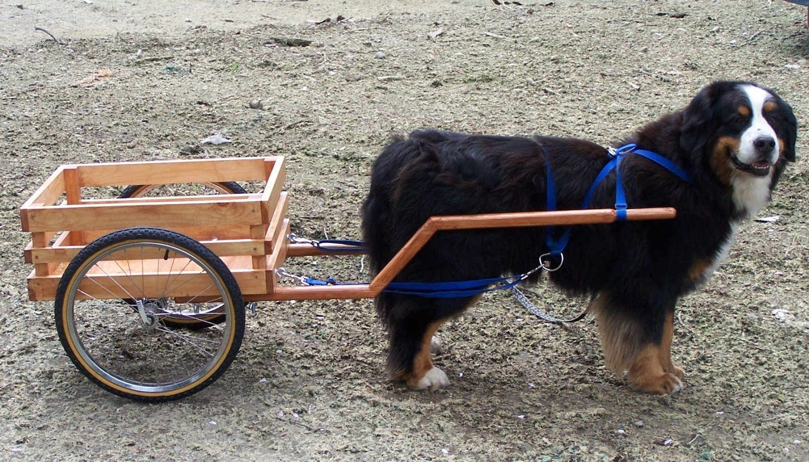 How To Make A Dog Cart For Dog To Pull
