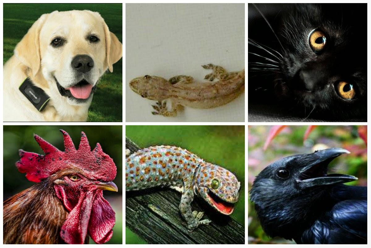 7 Hewan Ini Bisa Memberi Tahu Kehadiran Makhluk Gaib