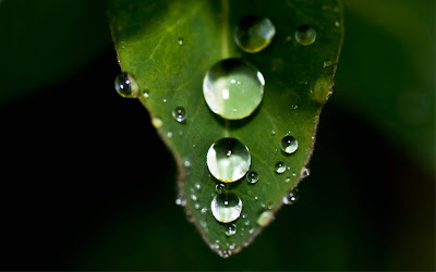 Water Drops Macro Widescreen Wallpaper 1