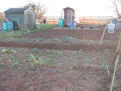 top end of the allotment for strawberry patch??